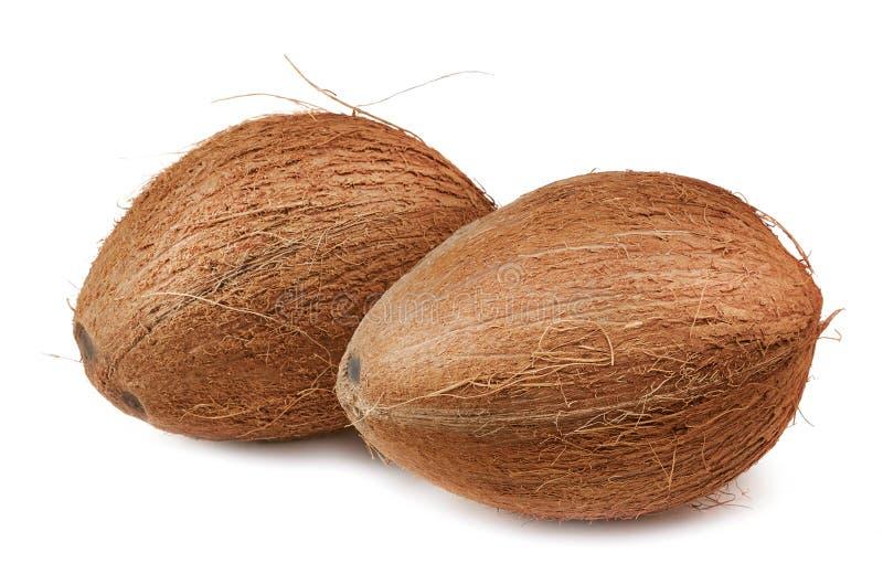 2 кокоса над белизной стоковая фотография