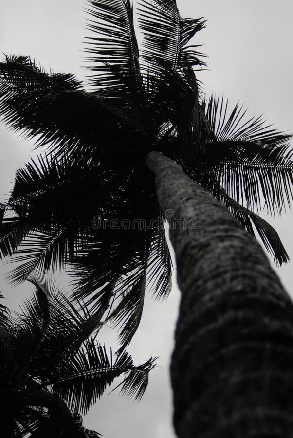 Кокосовая пальма в Керале стоковые фото