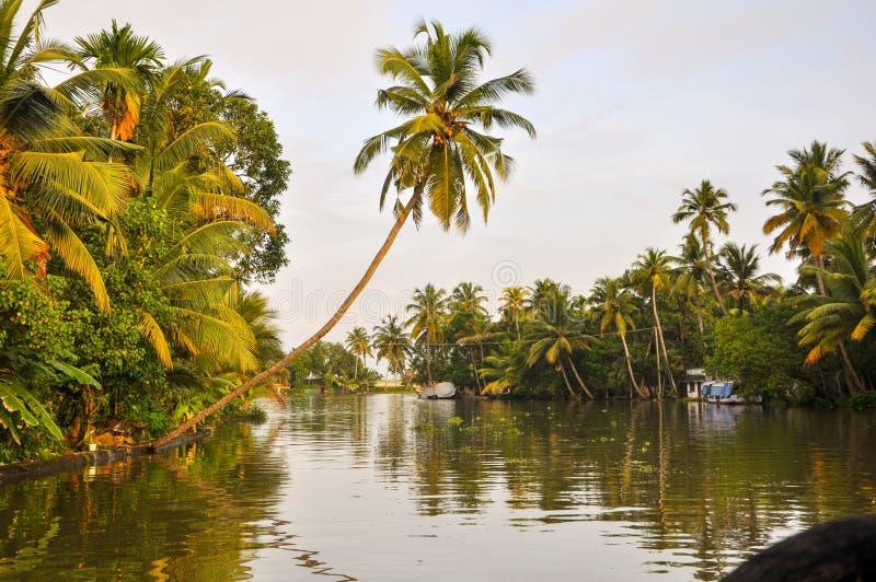 Кокосовая пальма над водой Кералы задней Alleppey Нажатый от шлюпки дома стоковое фото rf