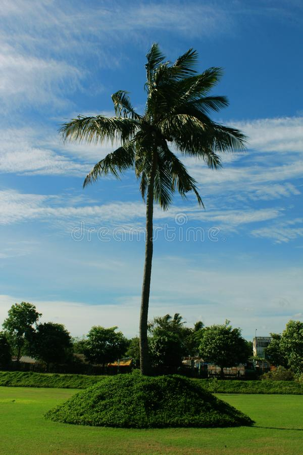 Кокосовая пальма с голубым небом стоковые изображения