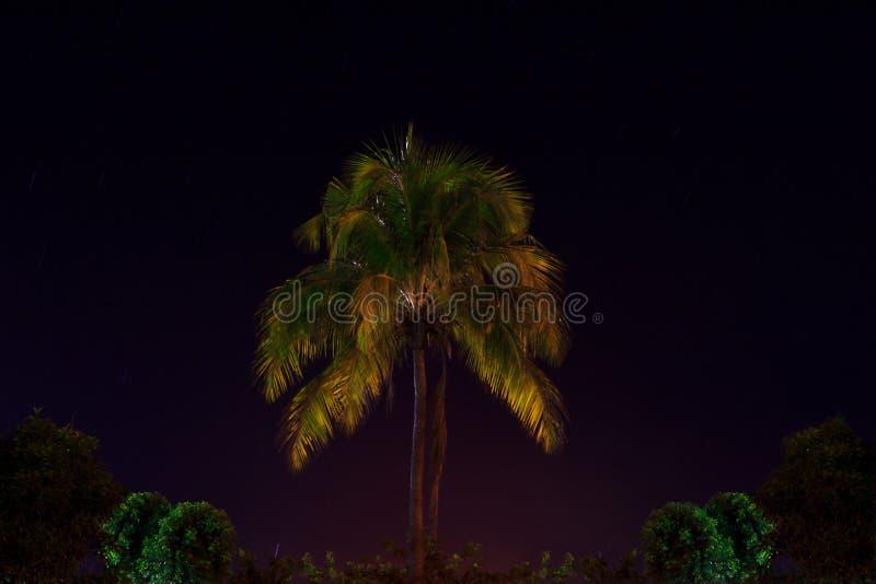 Кокосовая пальма в ноче стоковые изображения rf