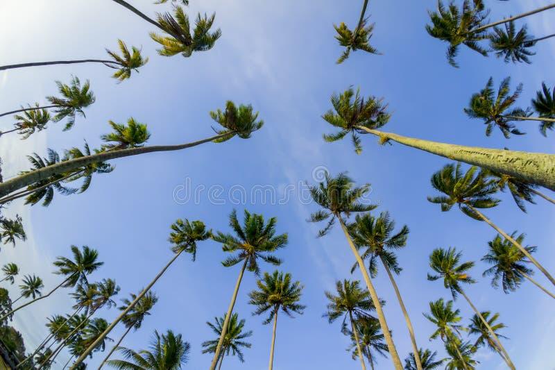 Кокосовая пальма и голубое небо стоковые фотографии rf