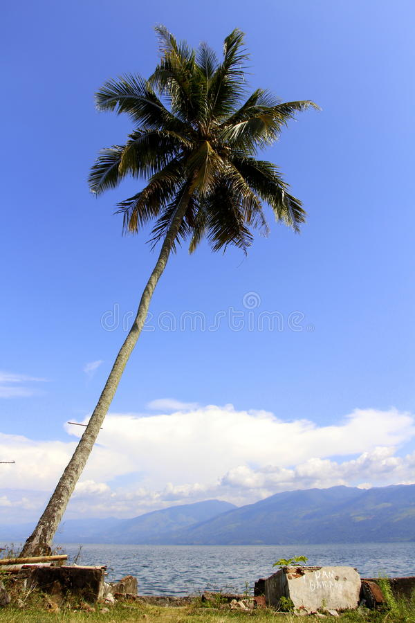 Кокосовая пальма и озеро стоковые фото