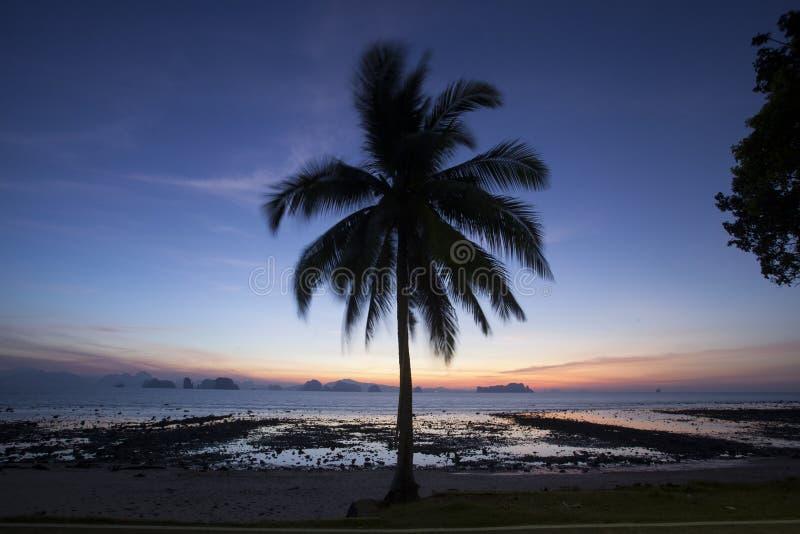 Кокосовая пальма на пляже Пхукета стоковое фото