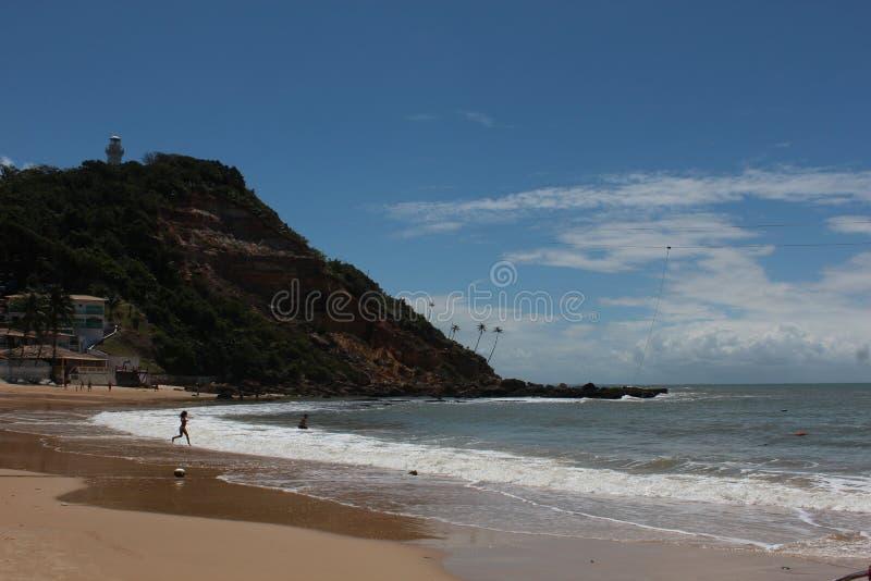 Кокосовые пальмы в пляже Carneiros в Pernambuco Бразилии стоковые фотографии rf