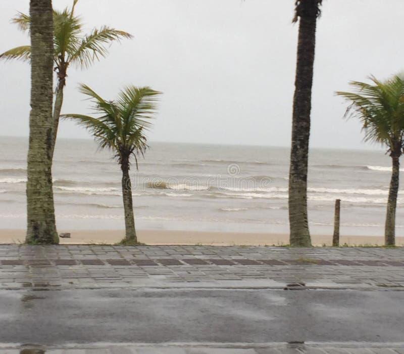 Кокосовые пальмы и дождливый пляж стоковые фото