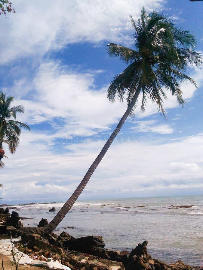 Кокосовые пальмы на пляже стоковые изображения