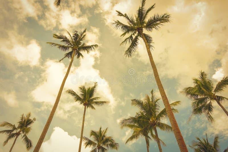 Кокосовые пальмы в предпосылке неба лета, винтажном тоне стоковое фото rf