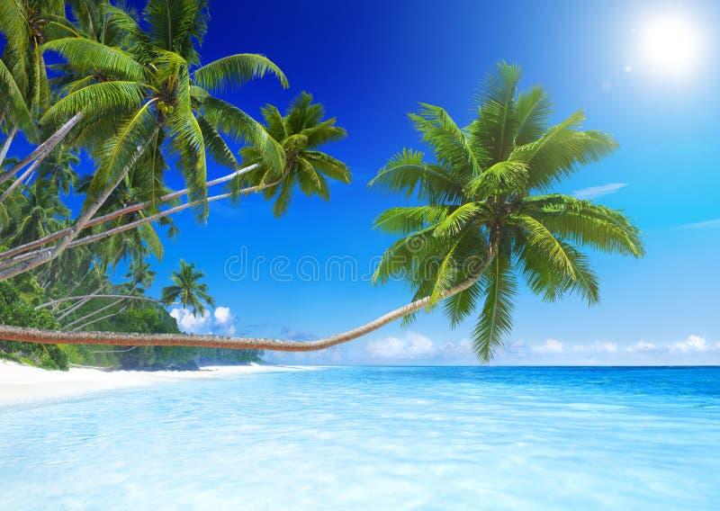 Кокосовые пальмы тропическим пляжем рая стоковые изображения rf