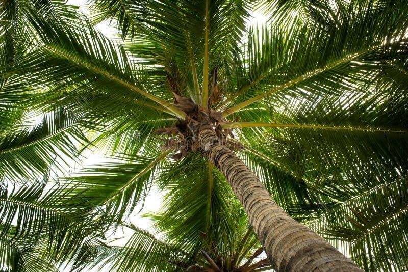 Кокосовые пальмы стоковые изображения