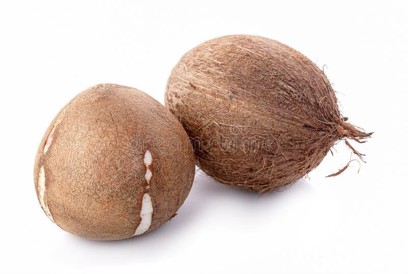 кокосы изолированные на белой предпосылке с путем клиппирования стоковое изображение