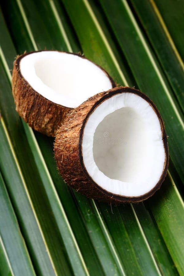 кокосы раскрывают стоковые изображения