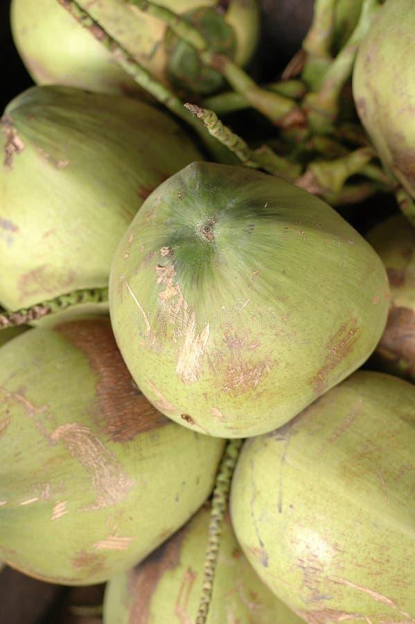 кокосы Стоковое Фото