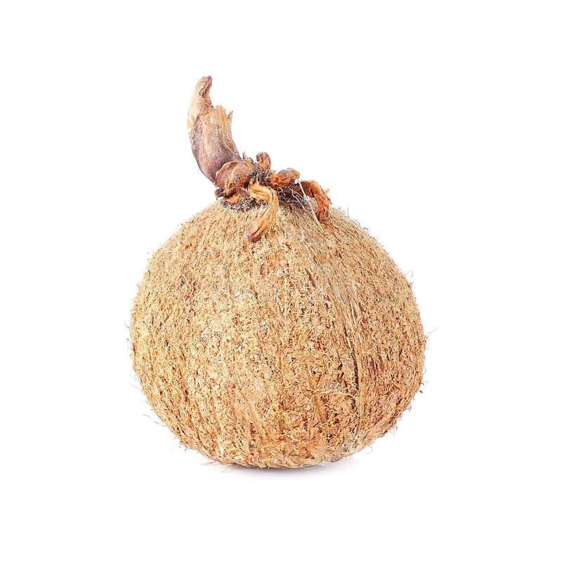 Кокос на белой предпосылке стоковое фото rf