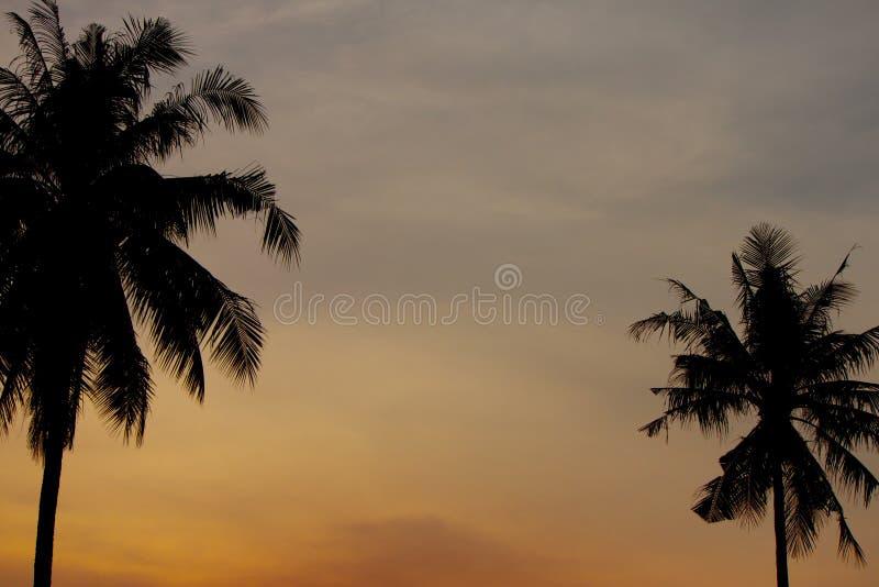 Кокос на лето стоковое фото rf
