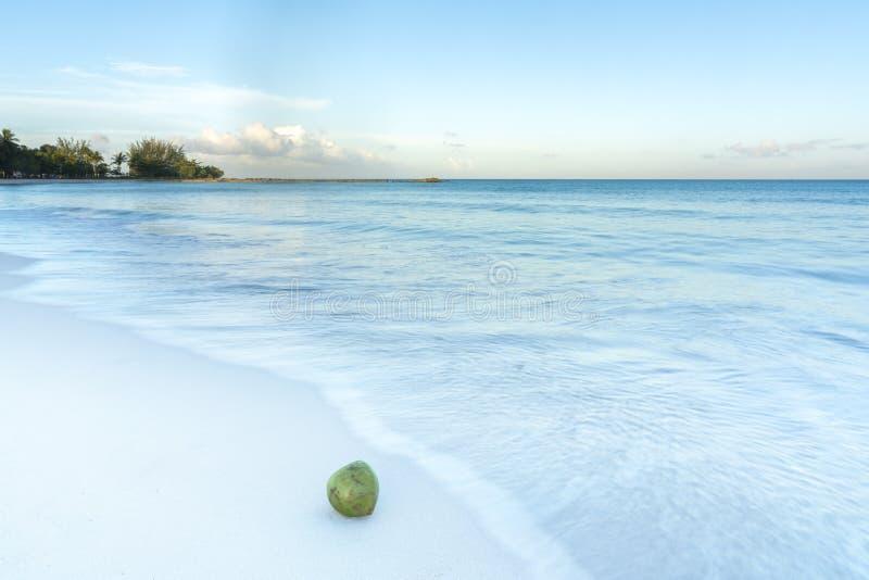 Кокос на чистом песочном тропическом пляже с ясным лапландцем открытого моря стоковое фото