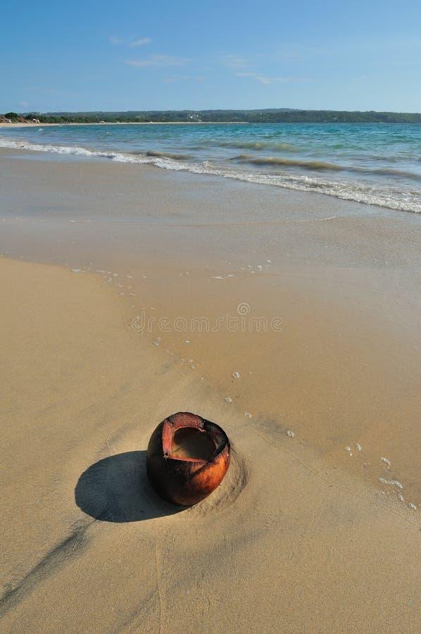 кокос пляжа стоковое фото