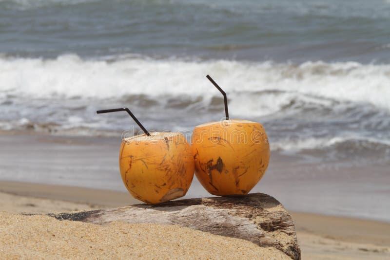 Кокос пляжем стоковое фото
