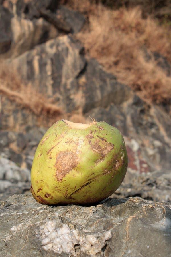 кокос стоковая фотография rf