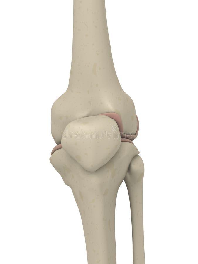 колено скелетное бесплатная иллюстрация