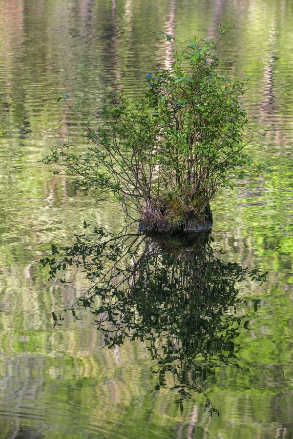 Колено Cypress в реке вилки горы, Оклахоме стоковая фотография