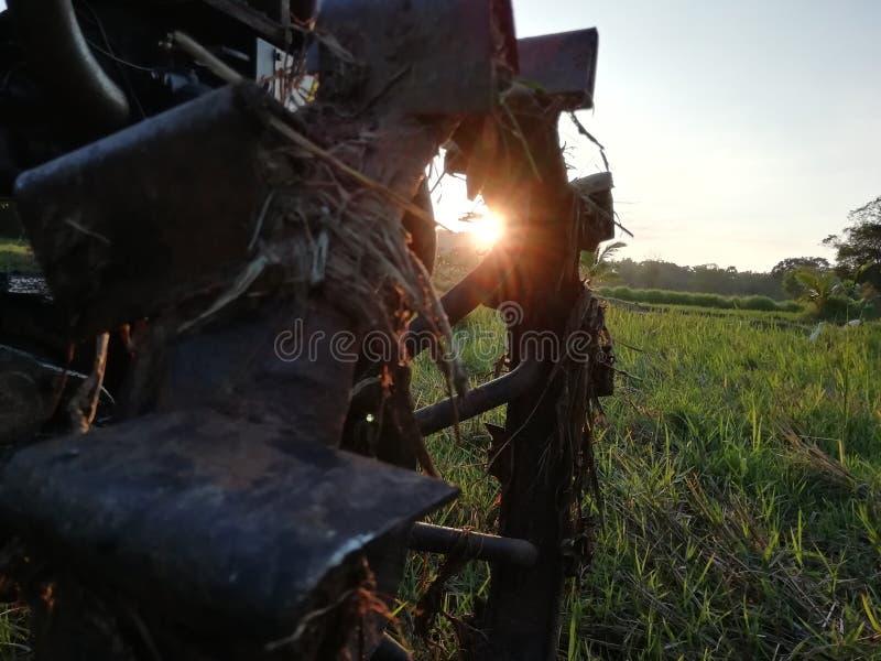 Колесо трактора на рисовых полях стоковые изображения rf