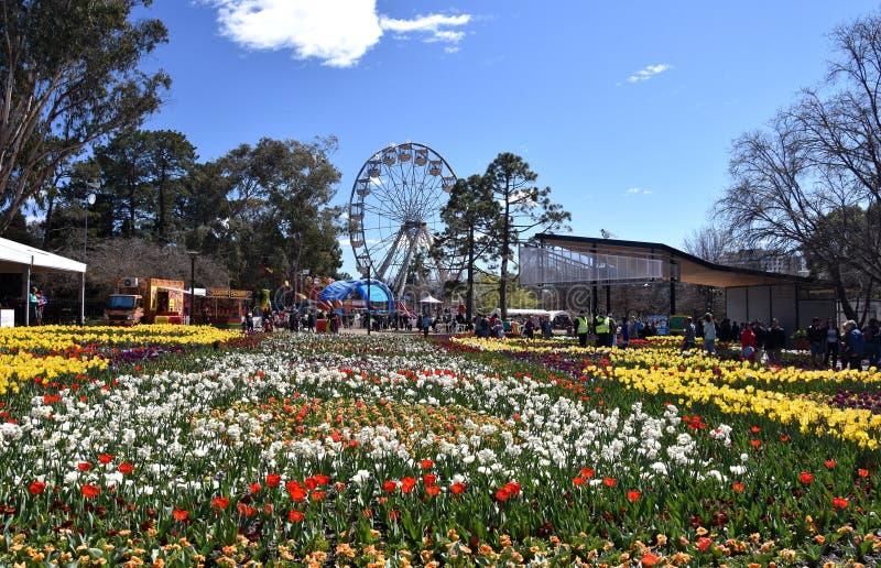 Колесо Ferris на фестивале весны Floriade стоковые фото
