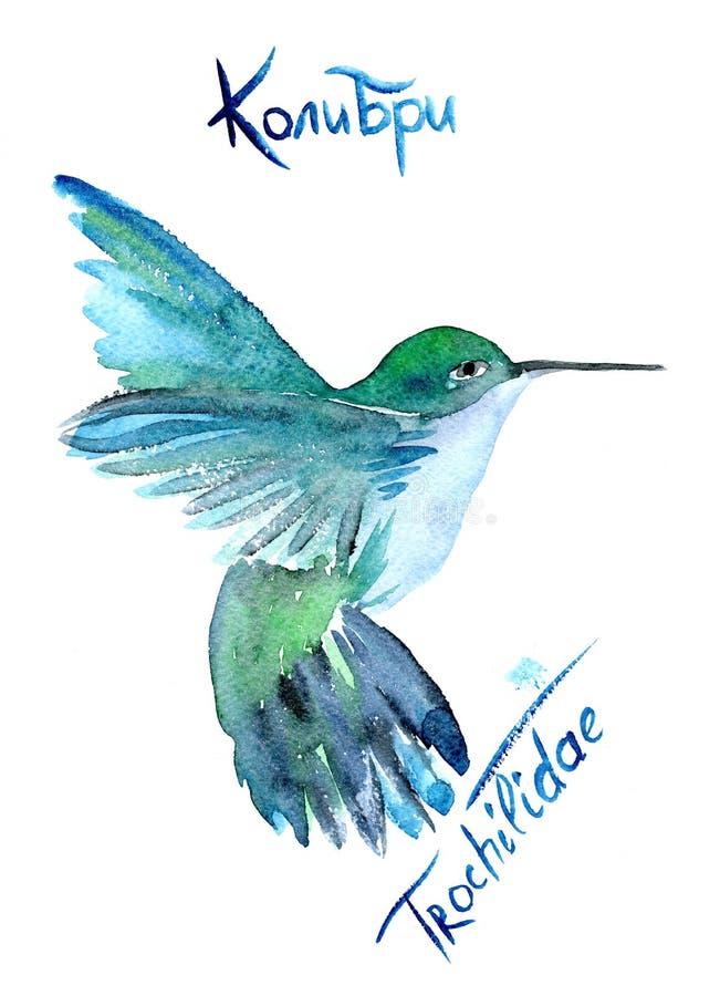 Колибри летания изолированный на белой предпосылке стоковое изображение rf