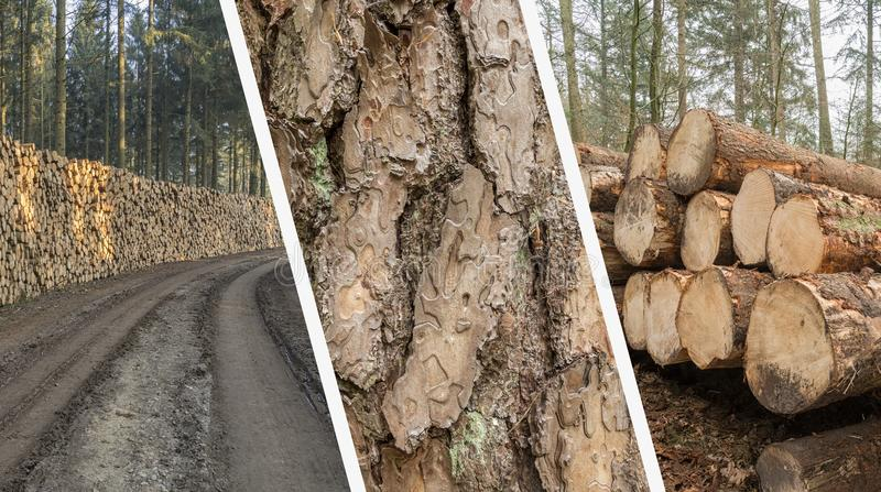 Коллаж лесохозяйства - индустрия тимберса - отрежьте и штабелировал дерево Trun стоковые изображения rf