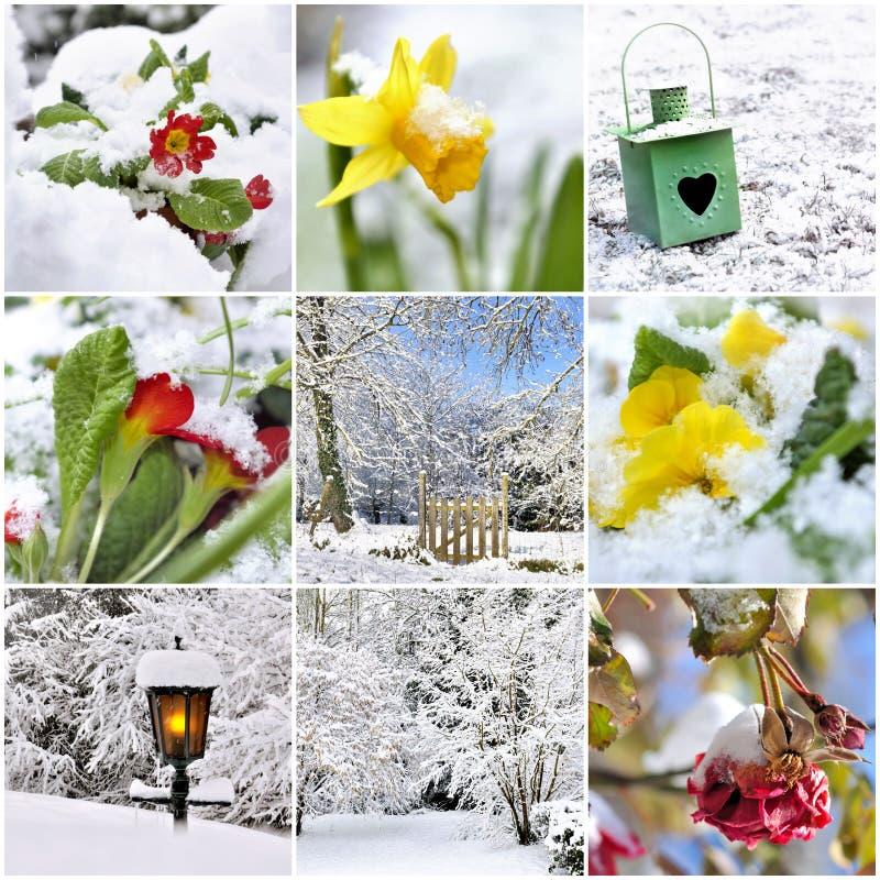 Коллаж на предмете wintergarden стоковые изображения
