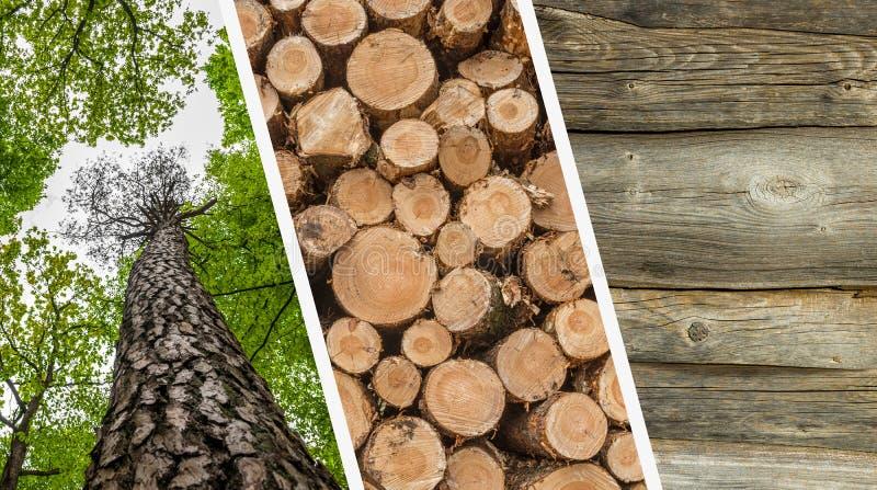 Коллаж обезлесения и деревянные журналы - лес, штабелированные хоботы отрезка деревьев и стоковые изображения rf