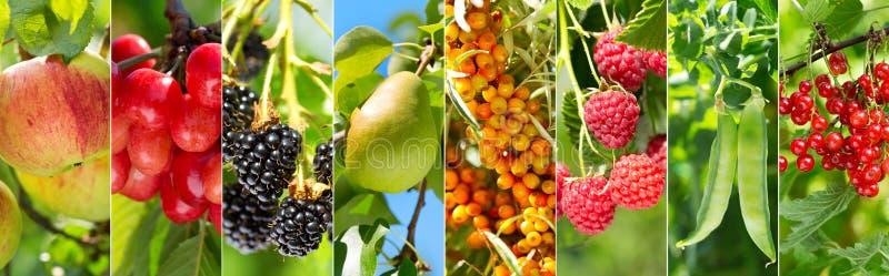 Коллаж различных плодоовощей и ягод стоковые фотографии rf