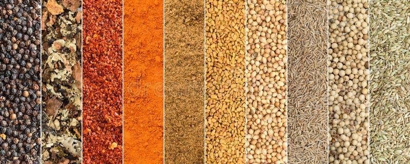 Коллаж различных трав и специй стоковые изображения