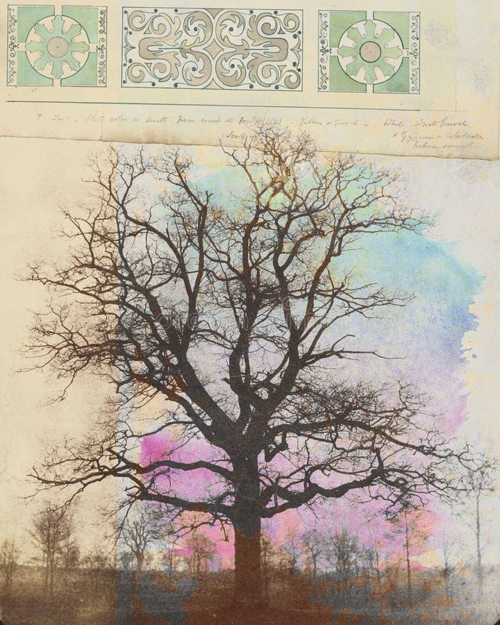 Коллаж сочетаний мультимедийных элементов в дереве зимы иллюстрация штока
