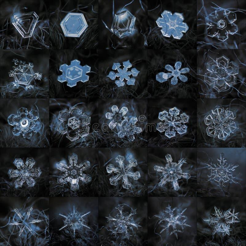 Коллаж с 25 реальными фото макроса снежинки стоковые фотографии rf