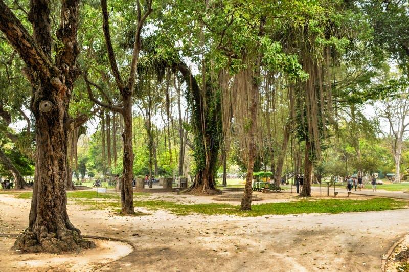 КОЛОМБО ШРИ-ЛАНКА - 17-ое марта 2018: Парк Viharamahadevi Tropica стоковое фото rf