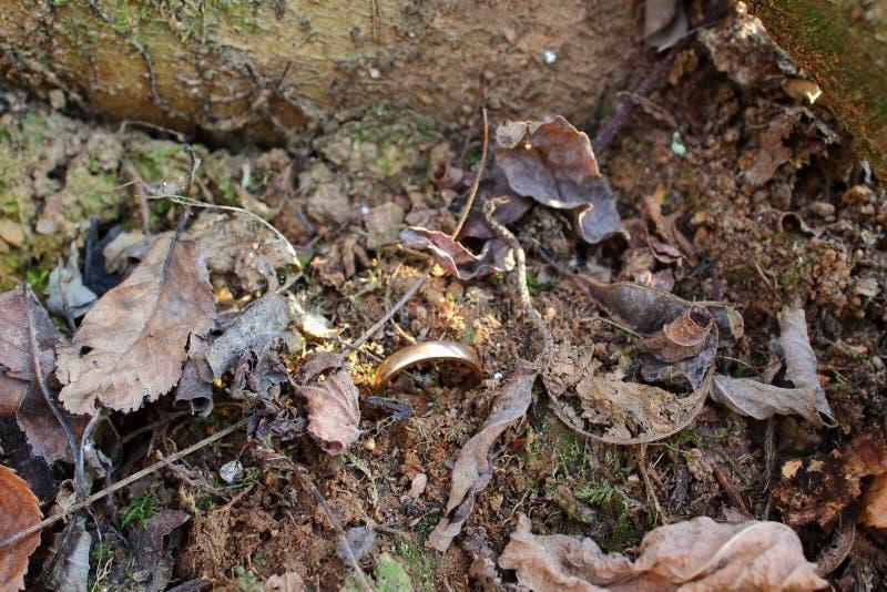 Кольцо вставленное в земле стоковое фото