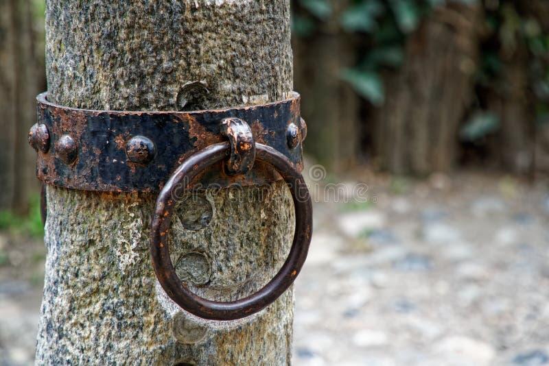 Кольцо для лошади, богато украшенное кольцо связи блокатора связи лошади утюга на фасаде средневекового замка, Турин, Италии стоковые изображения