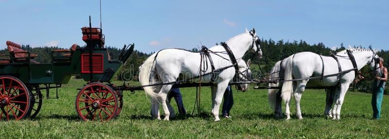 команда лошадей стоковые изображения