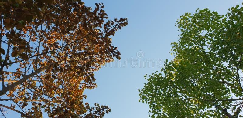 комбинация лист дерева стоковое фото rf