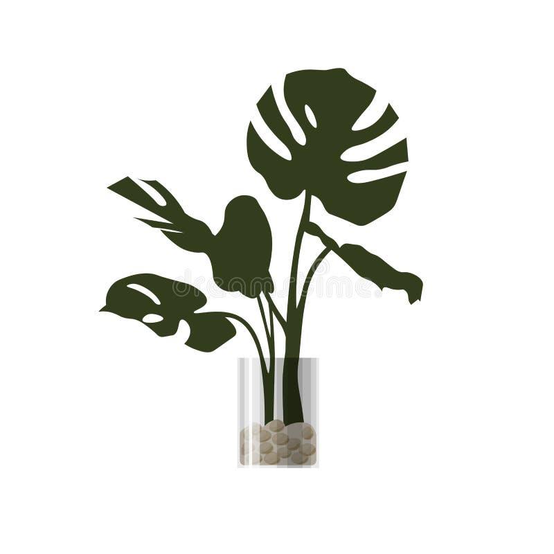 Комнатное растение в баке стоковые фото