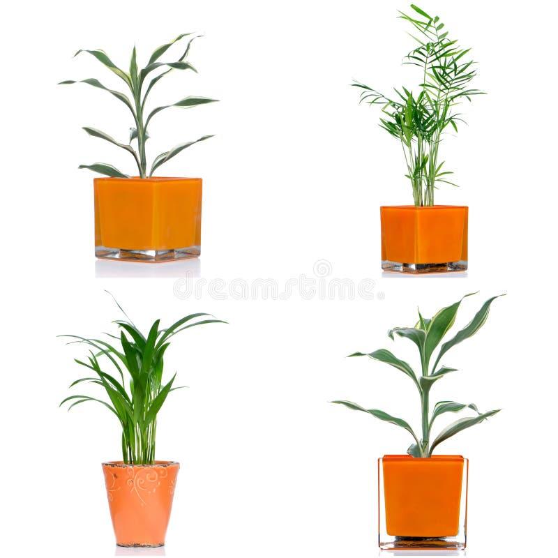Download Комнатные растения стоковое изображение. изображение насчитывающей свежесть - 40580619