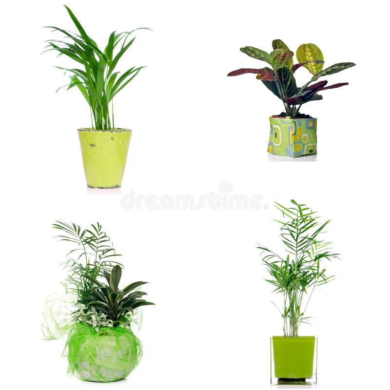 Download Комнатные растения стоковое фото. изображение насчитывающей brougham - 40580622