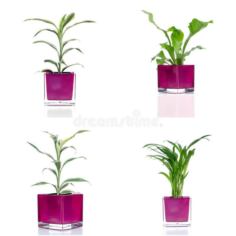 Download Комнатные растения стоковое изображение. изображение насчитывающей свежесть - 40580625