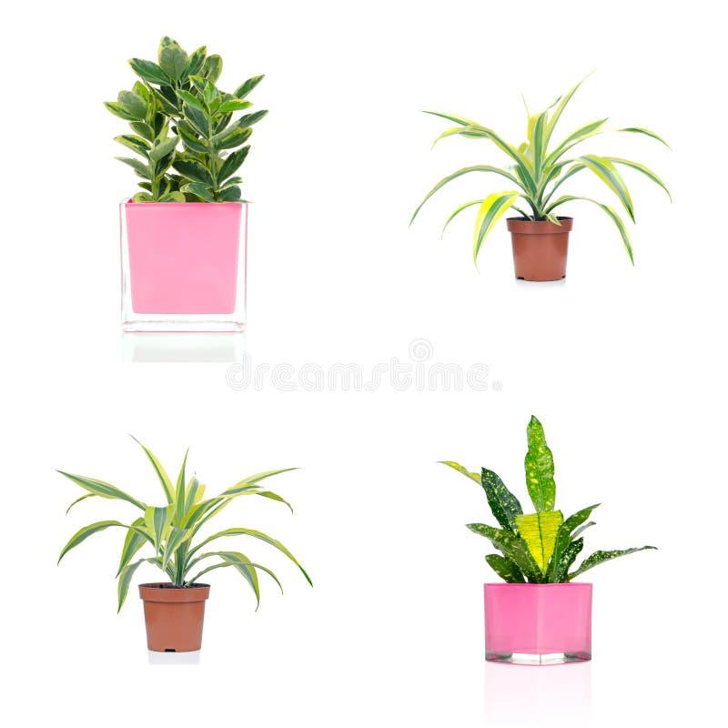 Download Комнатные растения стоковое фото. изображение насчитывающей houseplant - 40580634