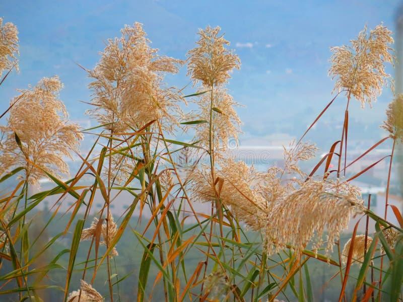 Комок высокорослой травы стоковое изображение rf