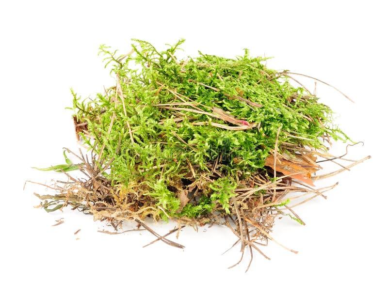 Комок зеленого мха стоковое изображение