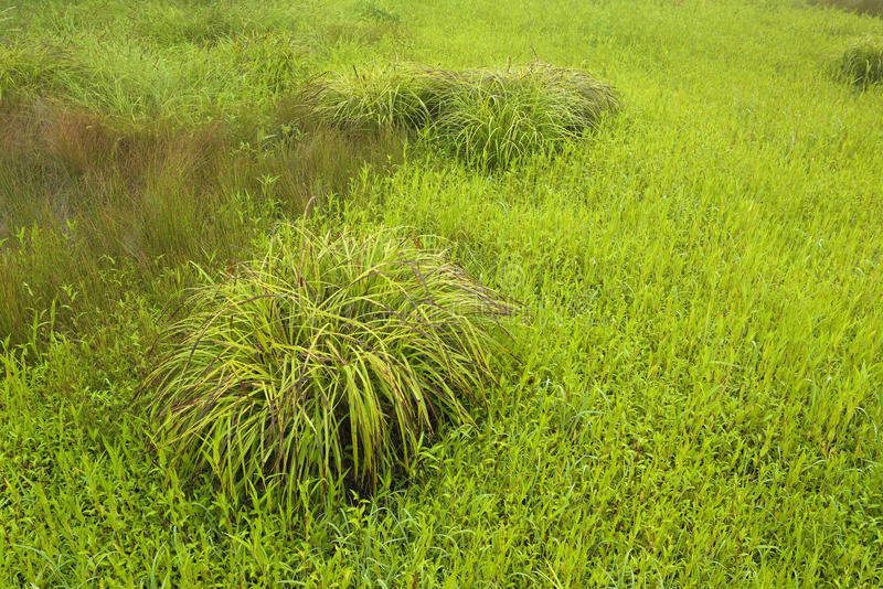 Комок травы в поле стоковая фотография rf