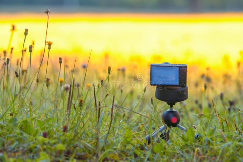 Компактное цифровой фотокамера на треноге с травой в поле или луге стоковое изображение