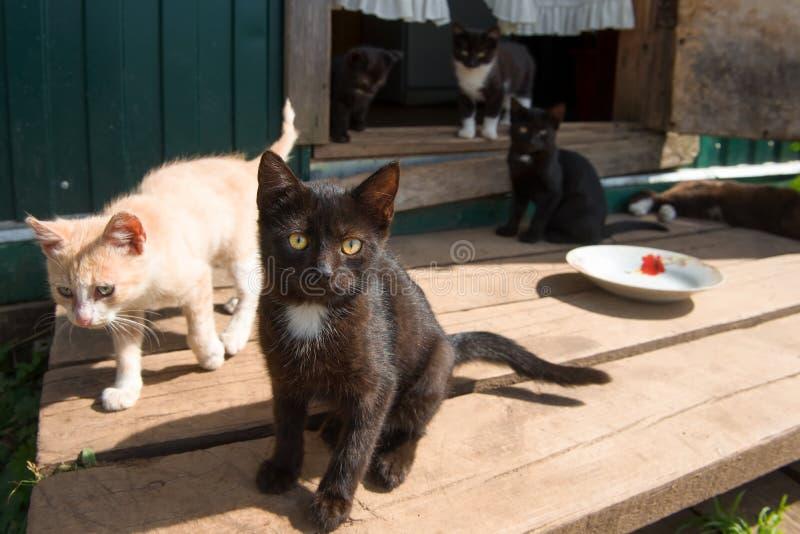 Компания маленьких котят стоковые фото